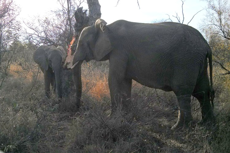 Elephants and Big Trees - Mitigation Methods