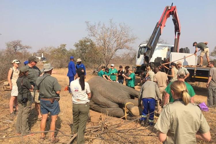 Elephant Capture and Translocation
