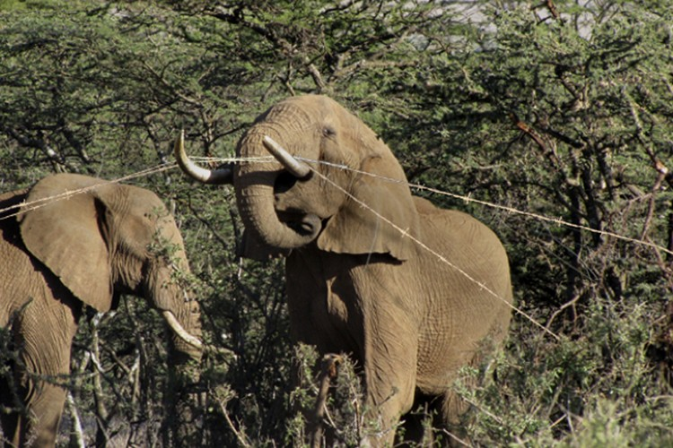 Elephants in Camp - Update