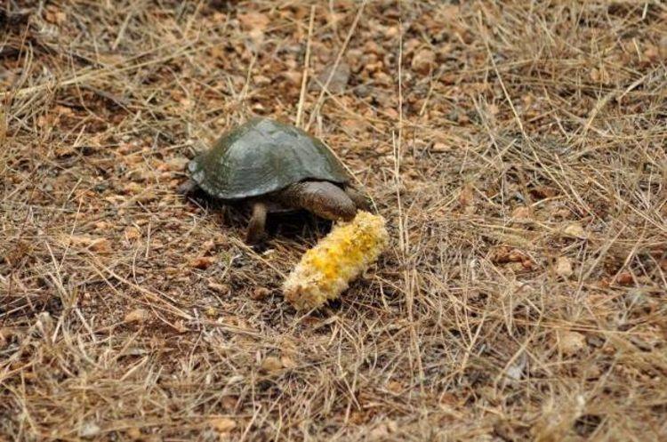 Feeding of wildlife